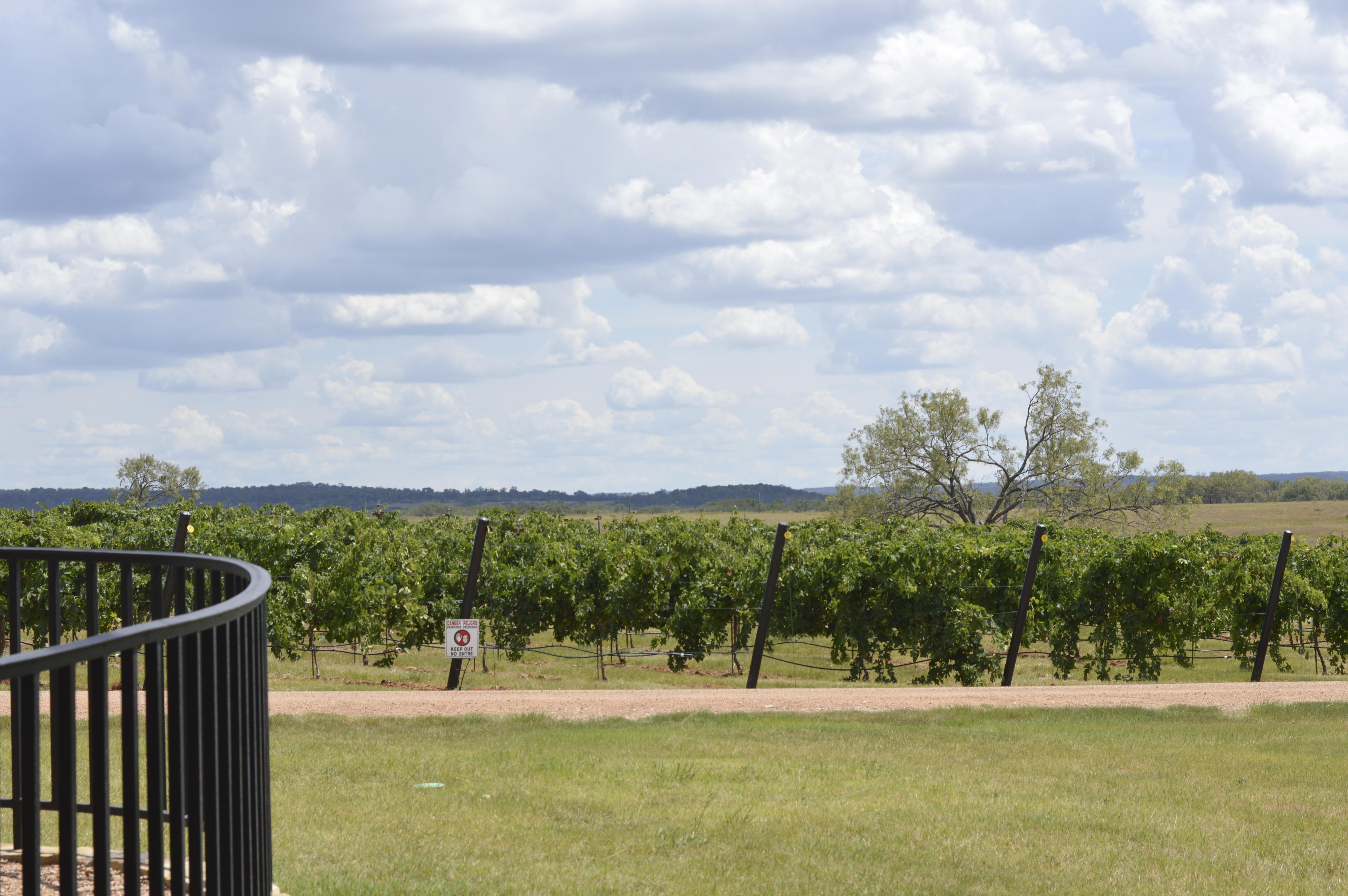 Grape Creek Vineyard