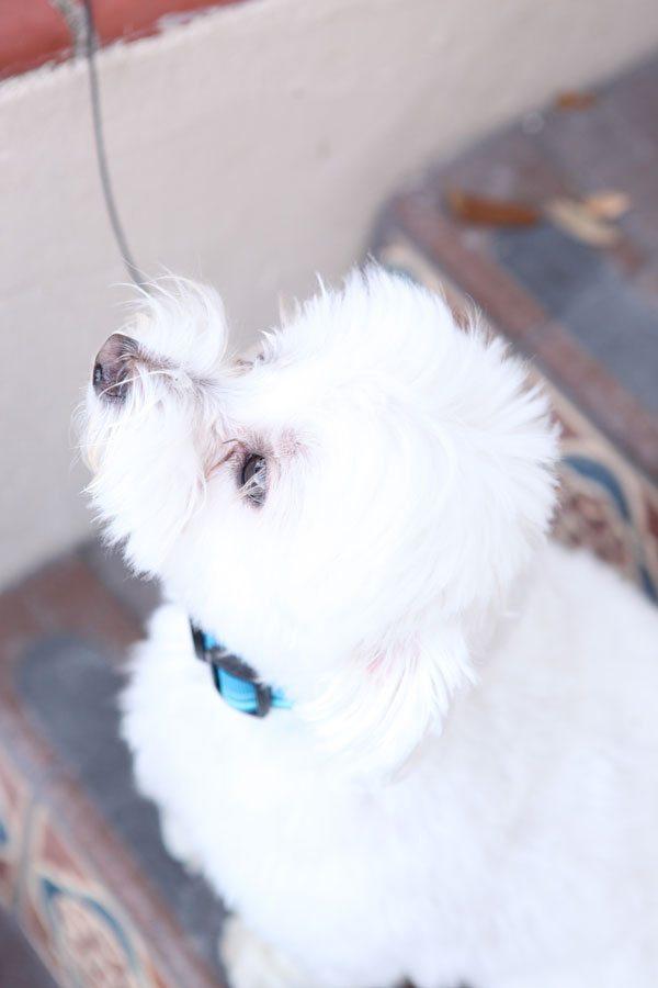 my dog Jaxson