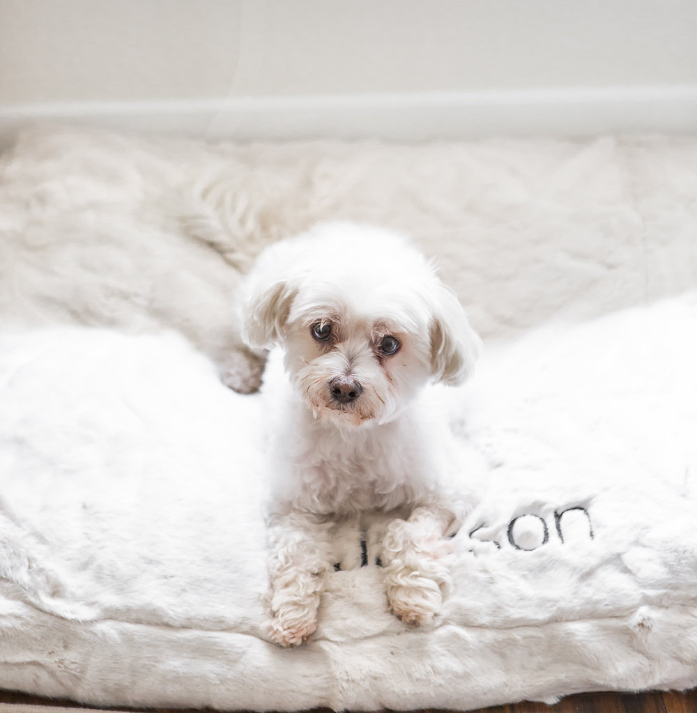 pottery barn monogramed pet bed