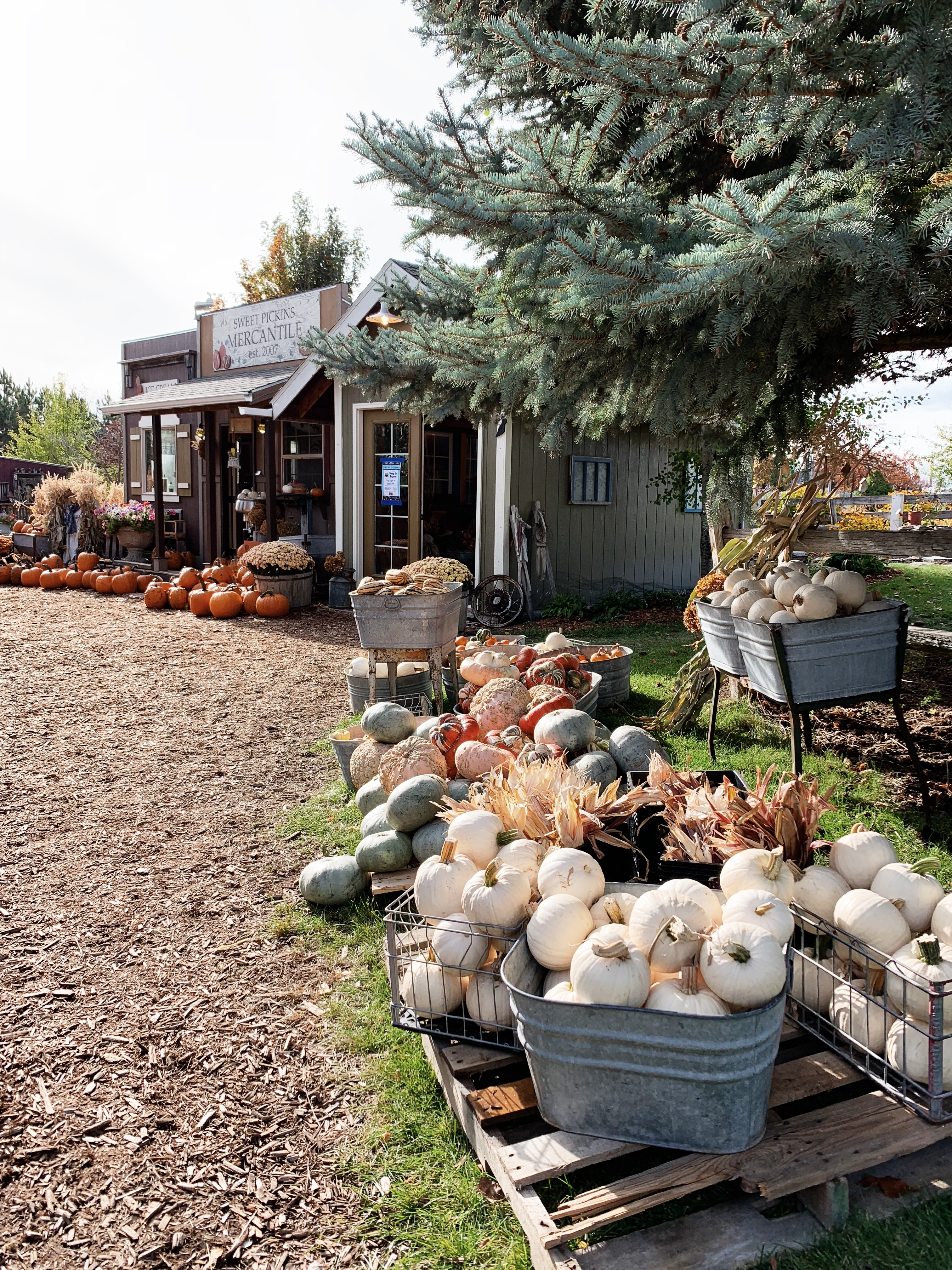 pumpkin picking store for fall in Montana